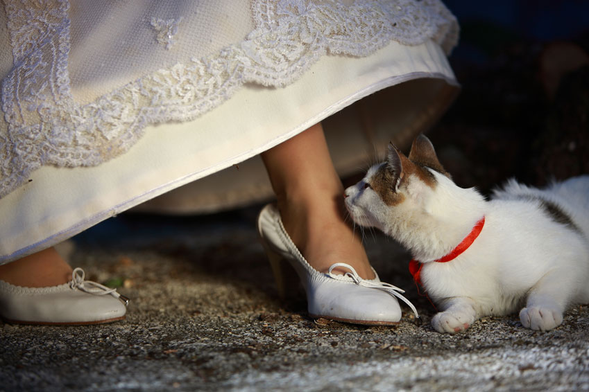 Bride-and-her-pet-000007435708_Medium