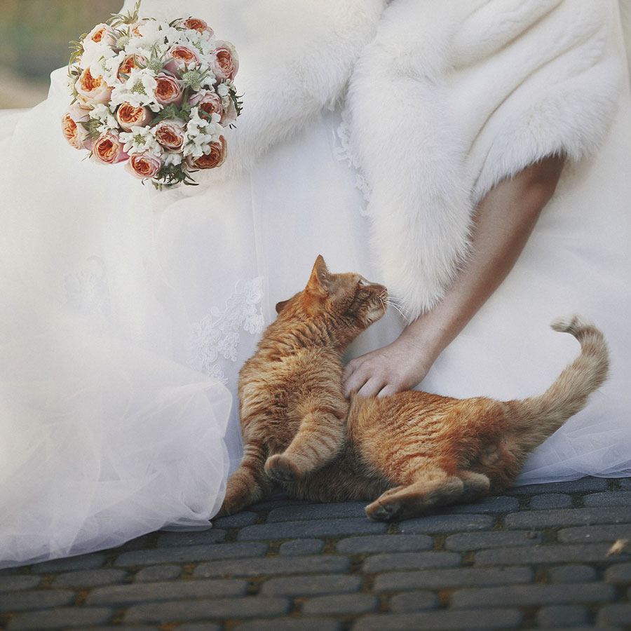 pretty-bride-with-bouquet-in-hand-stroked-red-cat-outdoors-000084612749_Medium