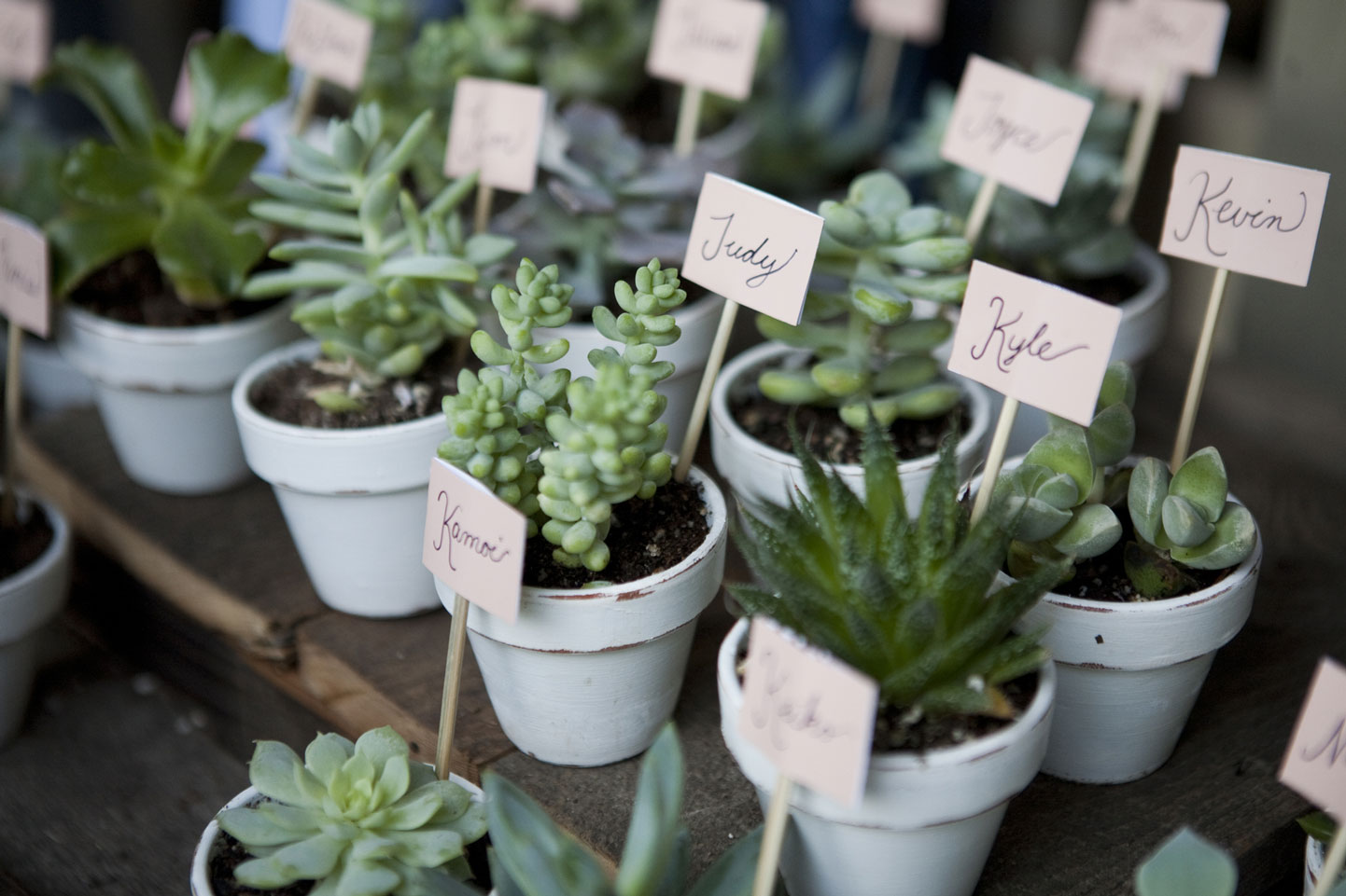 Succulent-Wedding-Favors-000098735821_Medium-(1).jpg