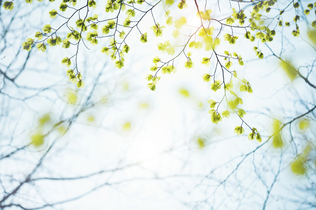 spring-leaves-000084233487_medium